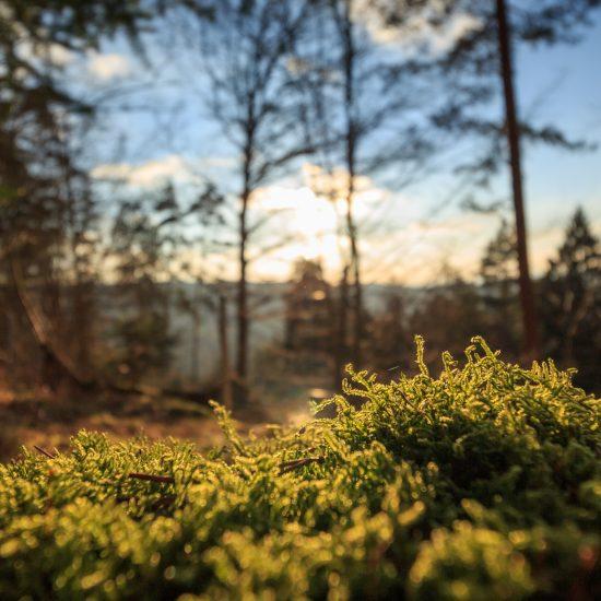 Der Wald des Cap Sizun